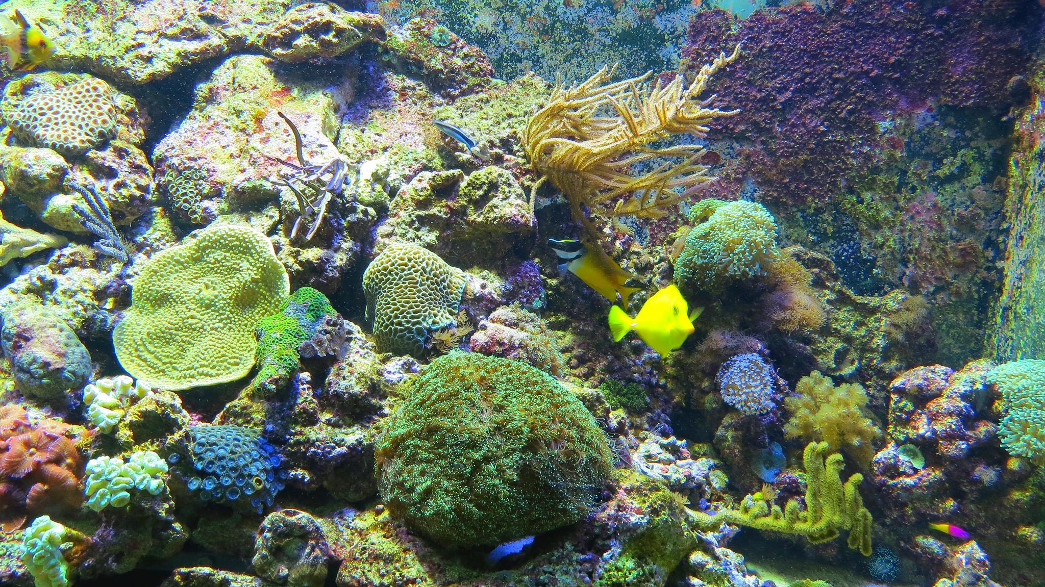 barcelona oceanarium