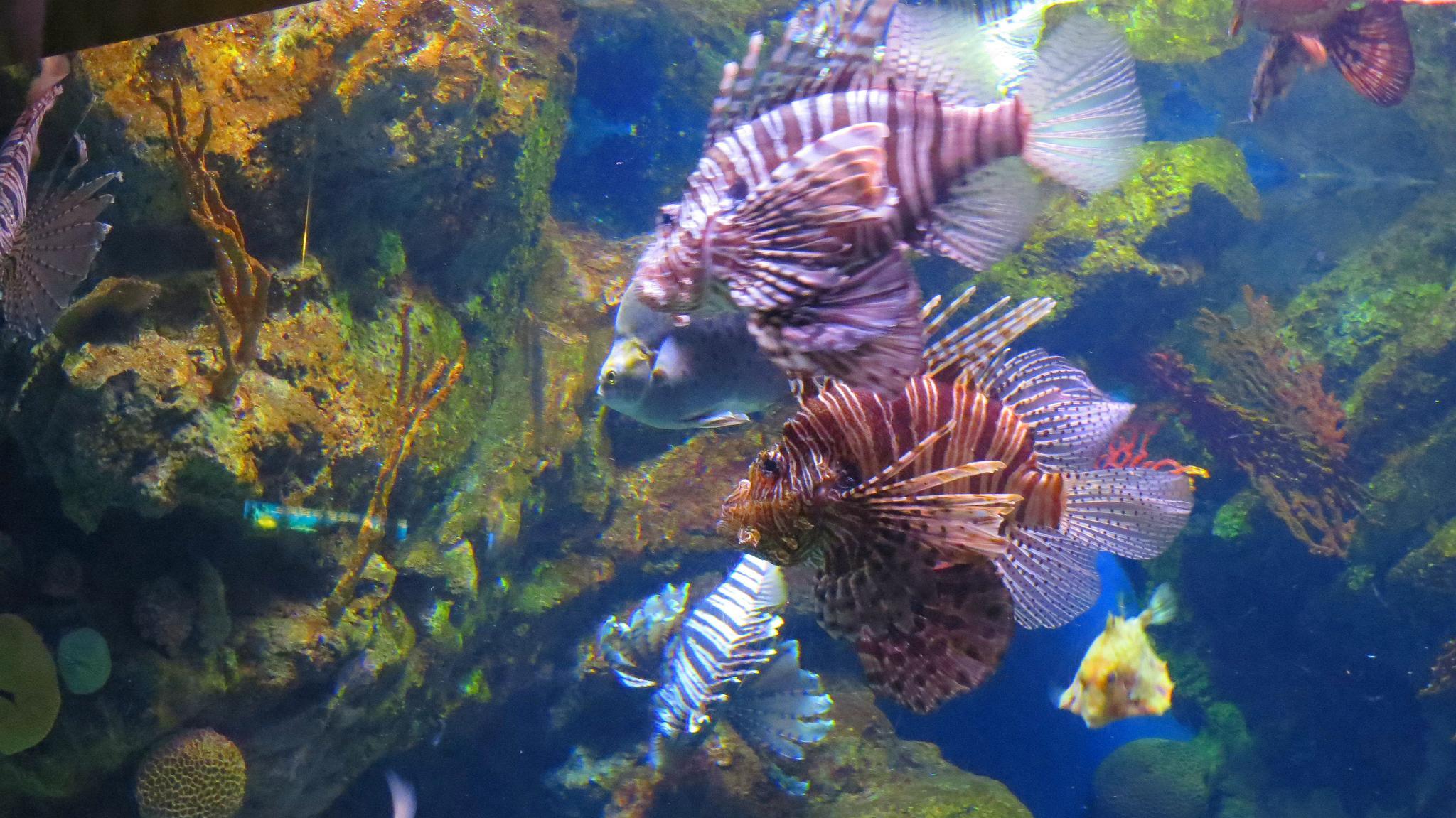 oceanarium atrakcje barcelona