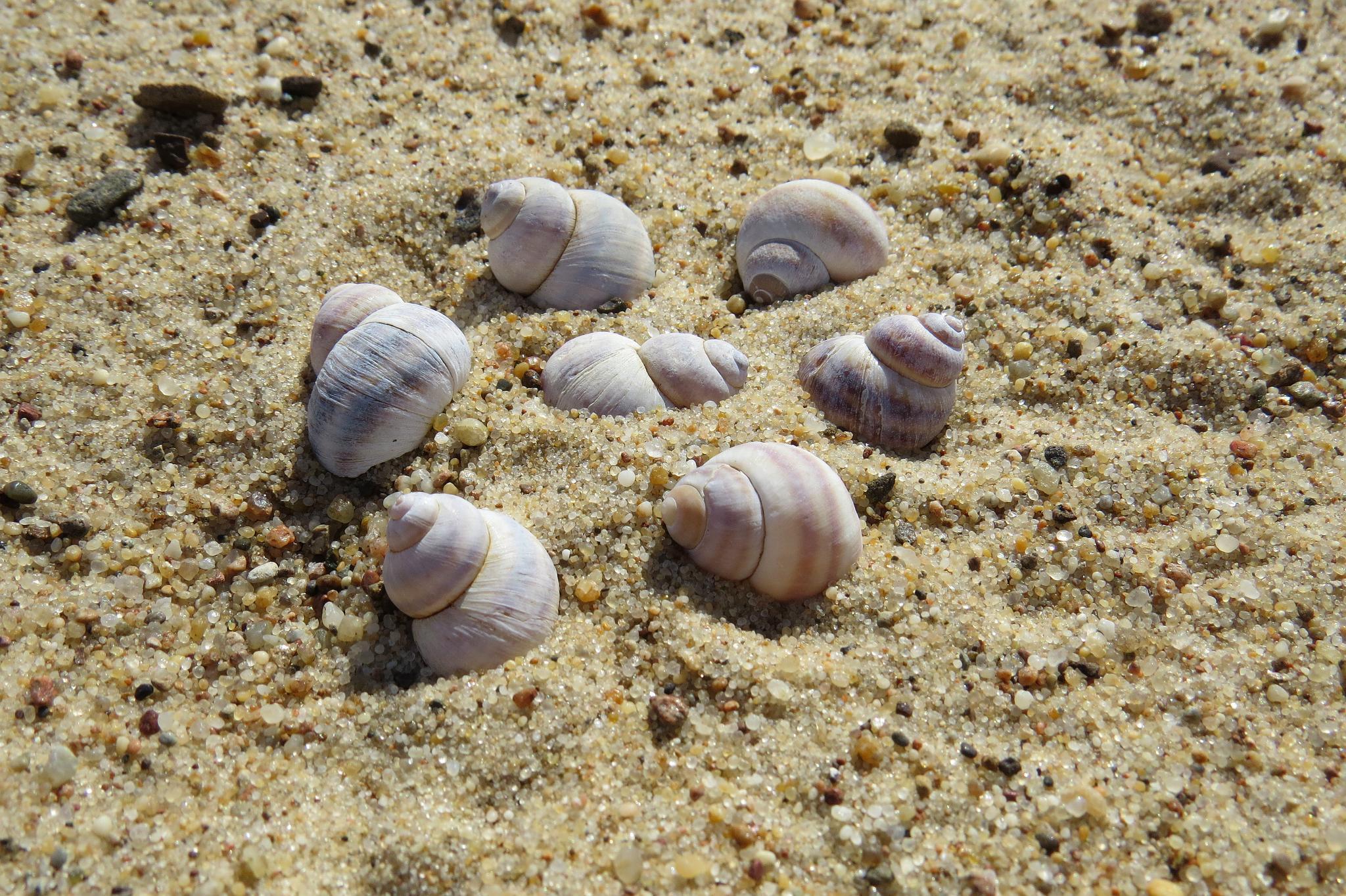plaża9small