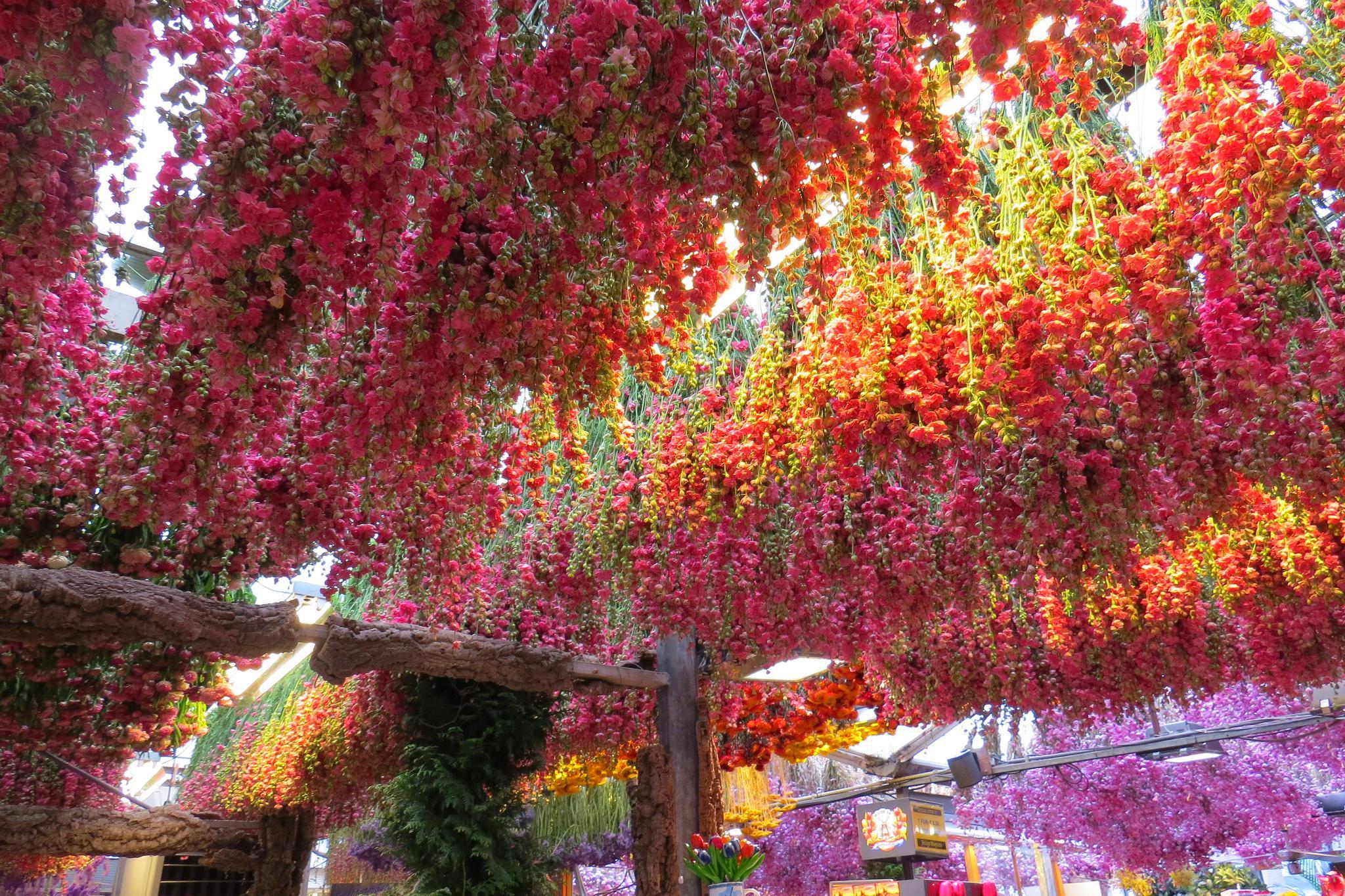targ kwiatowy w Amsterdamie kwiaty