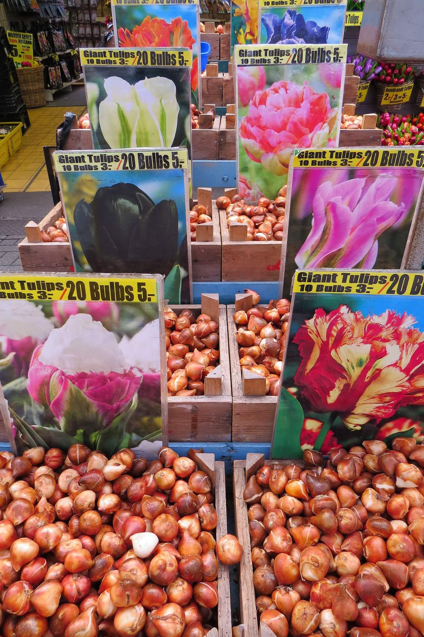 targ bloemenmarkt Amsterdam cebule
