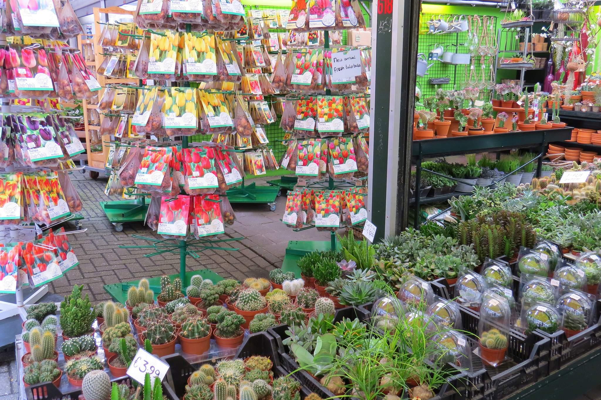 targ bloemenmarkt Amsterdam cebule kwiatów