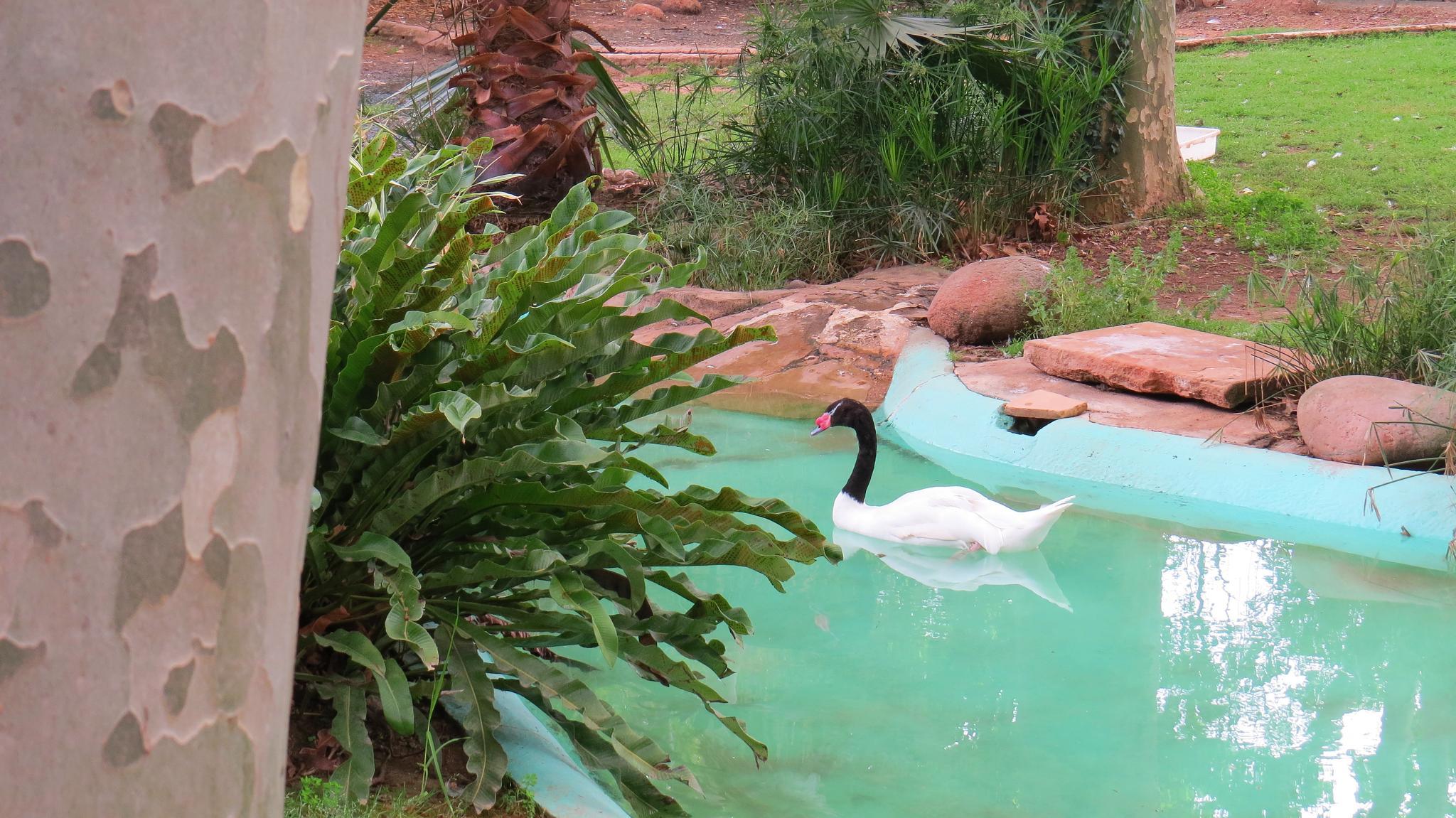 zoo atrakcje barcelony dla dzieci