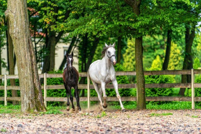 konie pałac alexandrinum