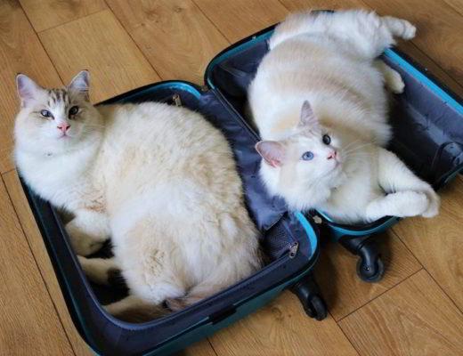 podróżowanie z kotem