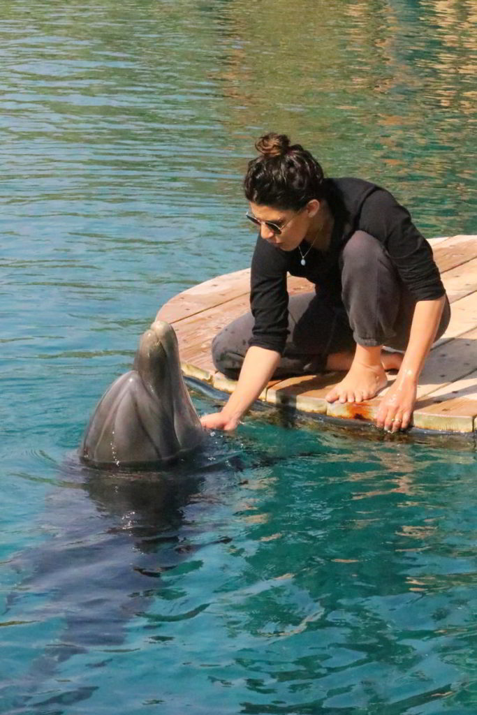 dolphin reef delfin