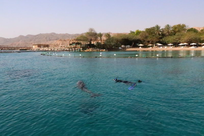 dolphin reef plaża