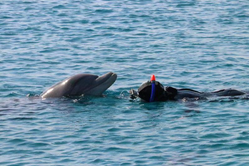 ejlat nurkowanie z delfnami