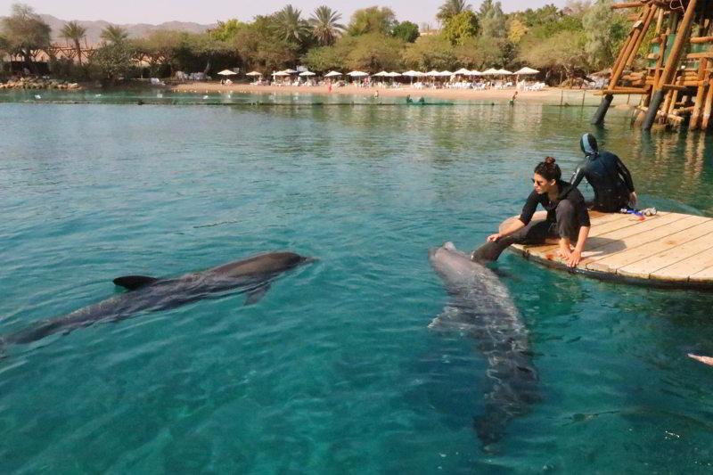 ejlat delfiny