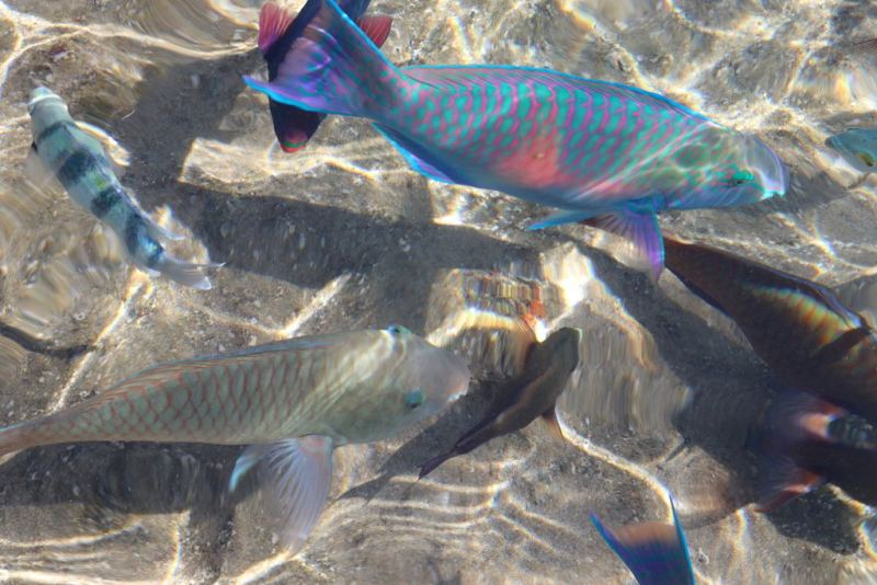 ejlat rafa koralowa