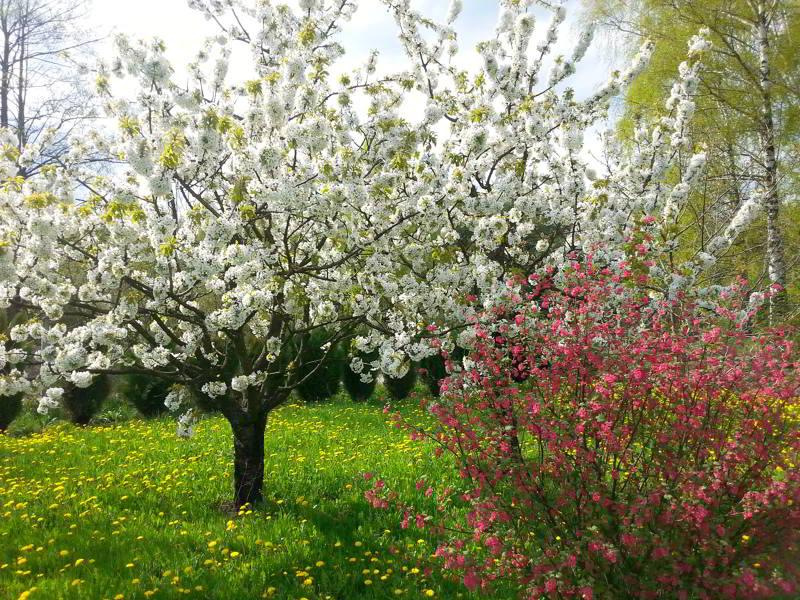 kalendarz alergii pylenie drzew
