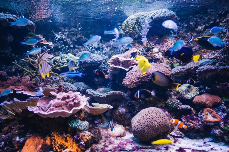 co warto zobaczyć w gdyni akwarium gdyńskie