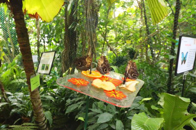 poznań zwiedzanie palmiarnia