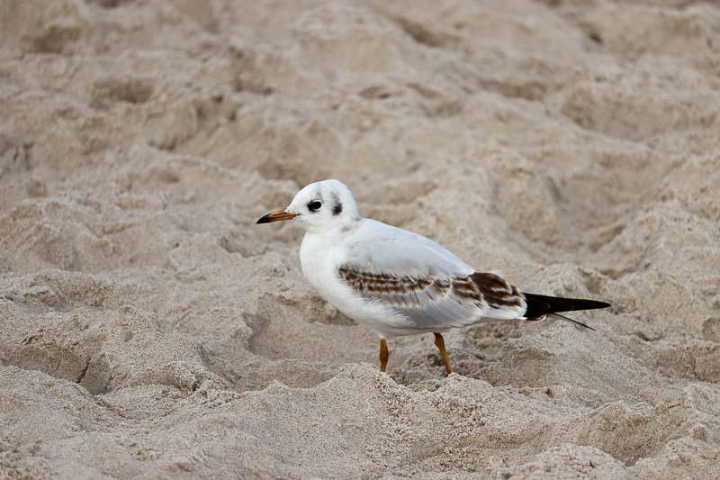 Jastarnia plaża