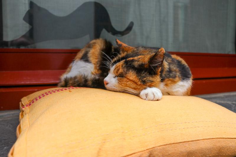 cadaques śpiący kot