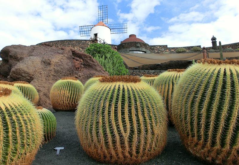 wyspy kanaryjskie lanzarote kaktusy