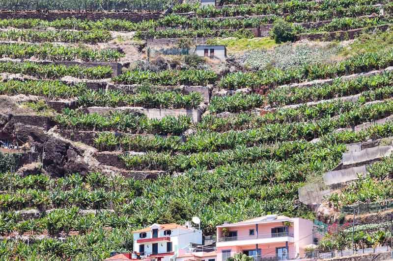 Camara de Lobos plantacje bananowców