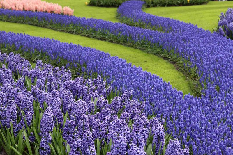 najpiękniejsze ogrody świata keukenhof holandia