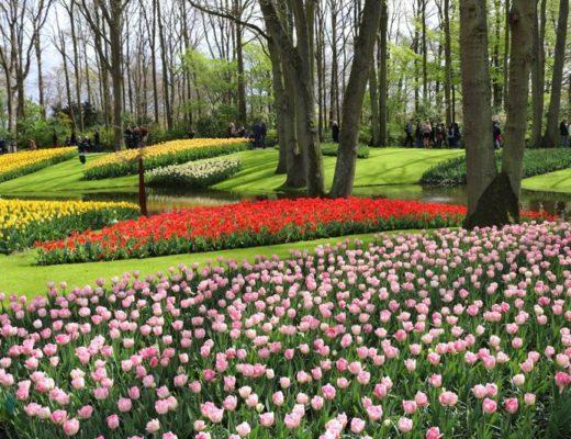 piękne-ogrody-na-świecie-keukenhof-holandia