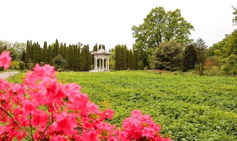 ogród botaniczny powsin altana chińska
