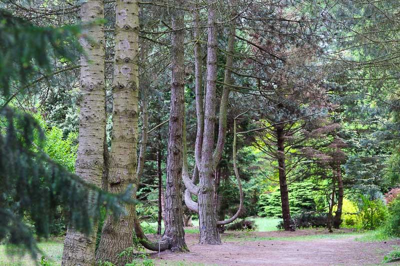 powsin ogród botaniczny arboretum