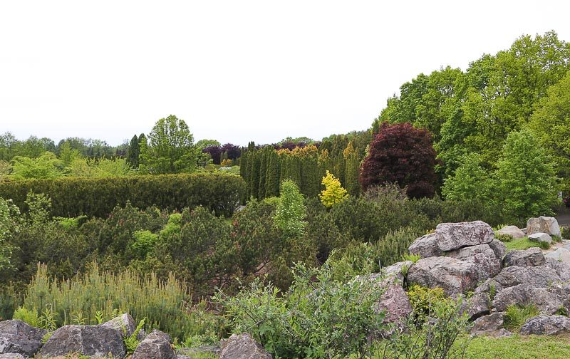 roslinność górska ogród botaniczny PAN Powsin