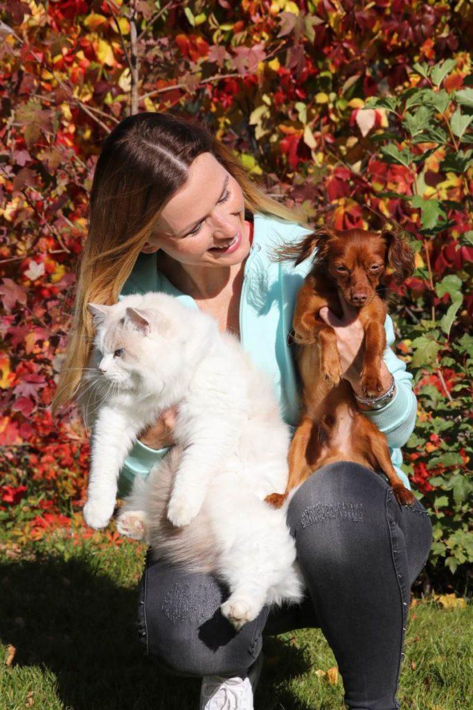 rasa kotów ragdoll