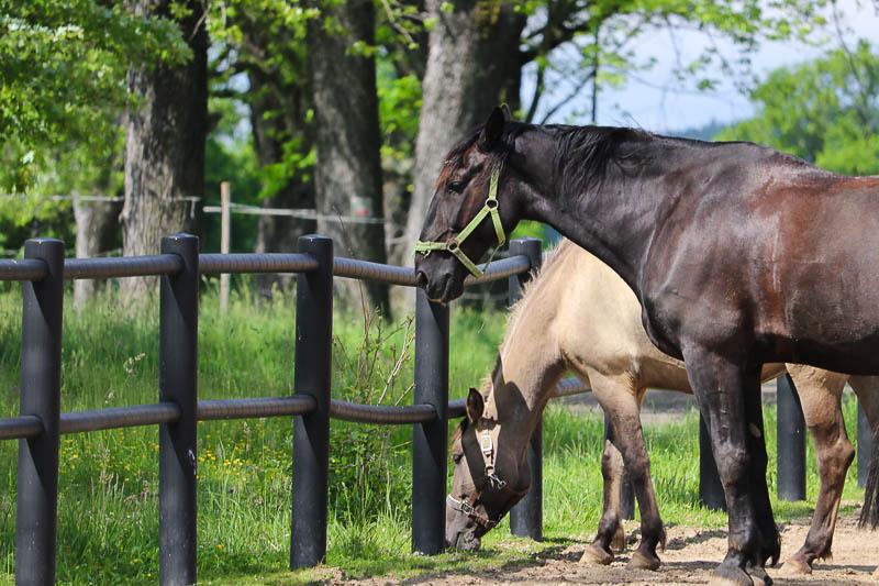Dworzysko szczawno zdrój konie