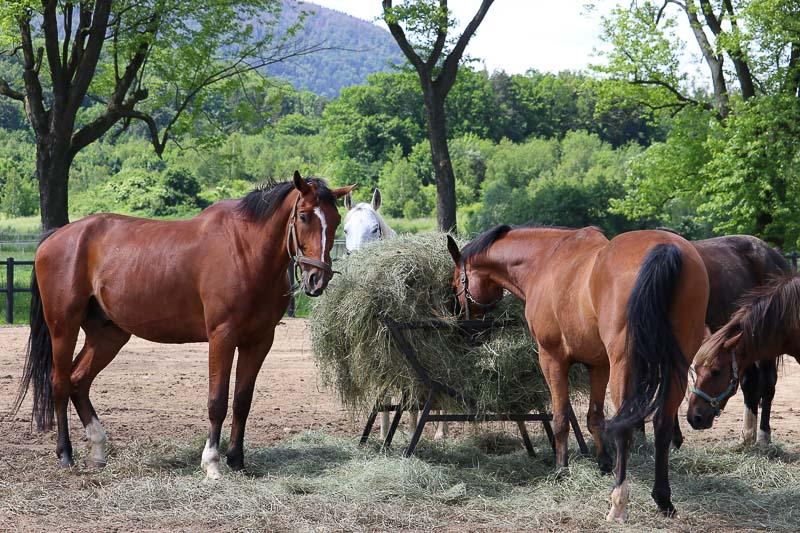szczawno zdrój dworzysko stadnina koni