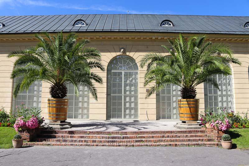 pałac w Wilanowie ogród przy oranżerii