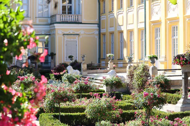 pałac Wilanów ogród różany