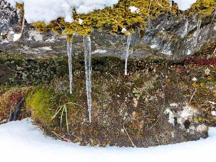 roślinność tatry kwiecień