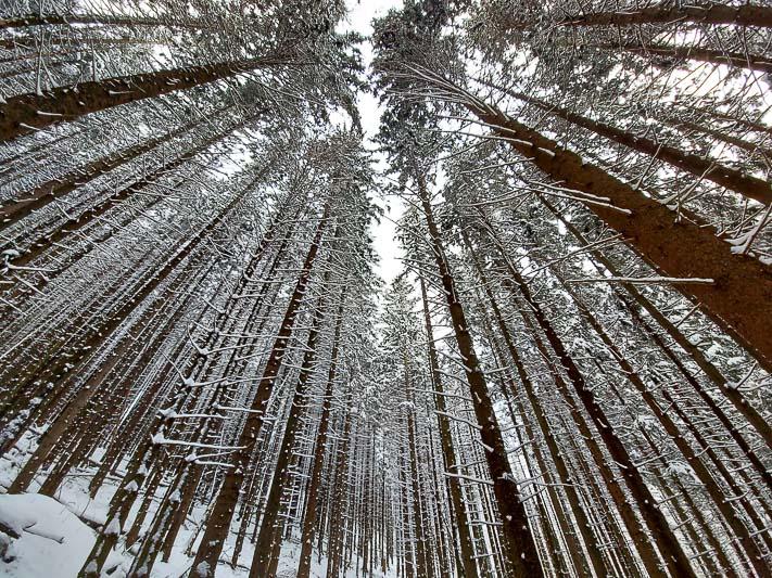szlak na sarnią skałę przez las