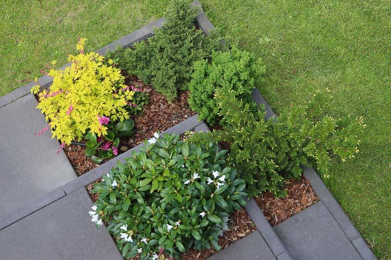 jak zaaranżować taras kwiaty rośliny