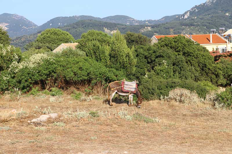 Afionas wioska Korfu Grecja